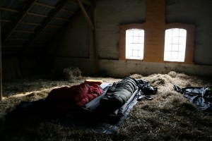 sleeping in hay