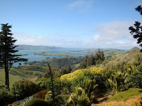 view from new zeland